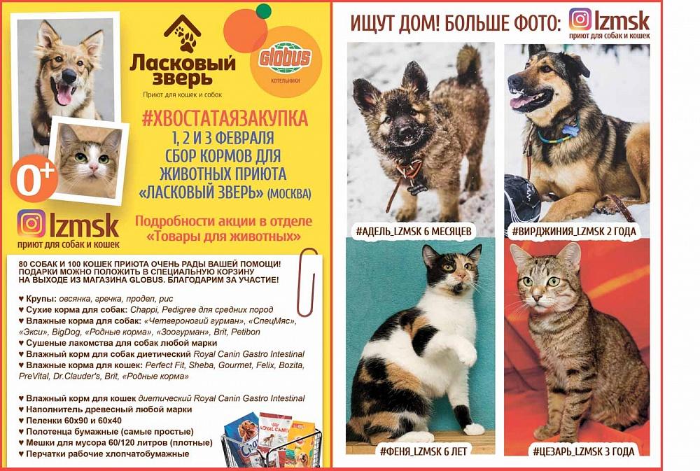 Типы и виды корма Роял Канин для кошек и его сравнение с